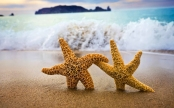 7009660-ocean-beach-starfish