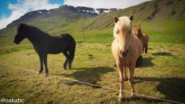 ม้าที่เจอข้างทาง ยืนสวยๆ