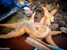 ออกเรือมาก็มากินซาซิมิหอยกันสดๆ ปลาดาวไม่กินนะ โยนกลับลงทะเลยเลย