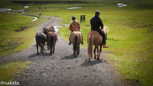 ม้าที่ Reykjadalur Hot Springs